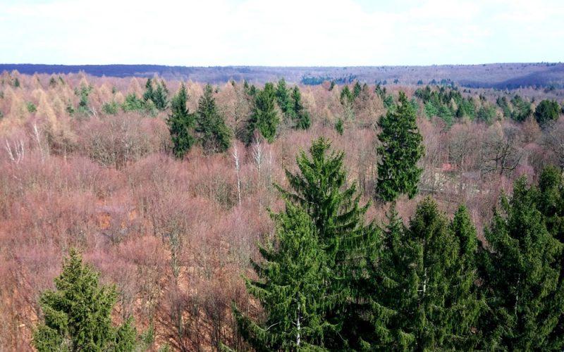 Aussicht-auf-den-Steigerwald-am-Baumwipfelpfad©RosiKmitta