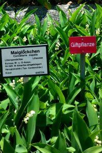 Pflanzenbörse-Botanischer-Garten-Würzburg18©RosiKmitta