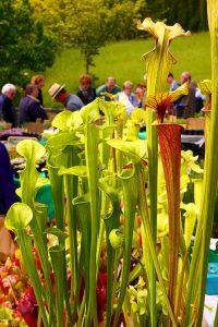 Pflanzenbörse-Botanischer-Garten-Würzburg6©RosiKmitta