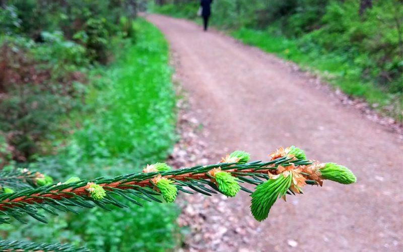 Waldspaziergang©RosiKmitta