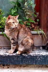 Katze-in-kleiner-Gasse-in-Lüttich©RosiKmitta