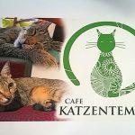 Café-Katzentempel-Nuernberg2©CaféKatzentempelNürnberg
