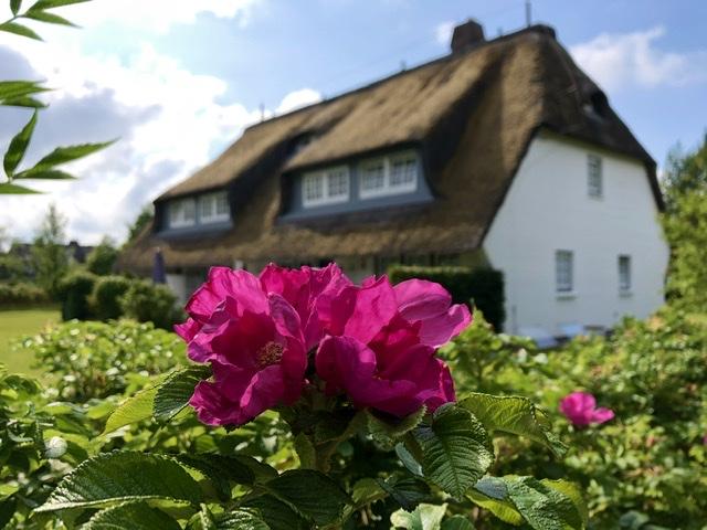 Reetgedecktes Friesenhaus mit Rosen im Garten ©RosiKmitta